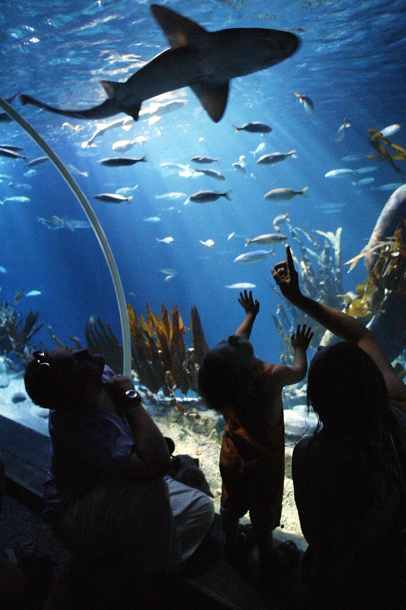 Aquadom Sea Life